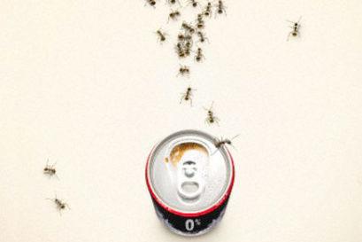 cola-ants