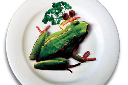frogfood1