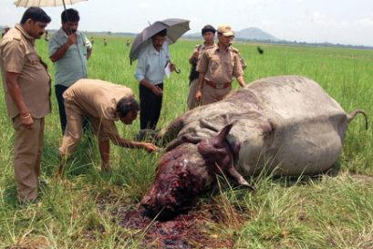 maoist-wildlife