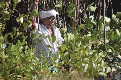 real-india-mangrove