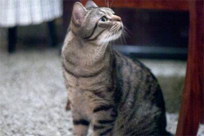 true-life-cat2