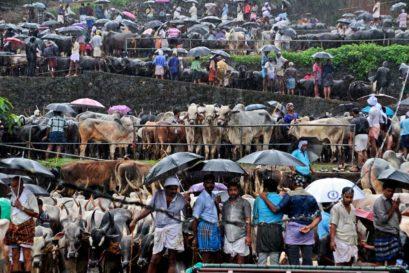 Impact of Beef Ban in Kerala
