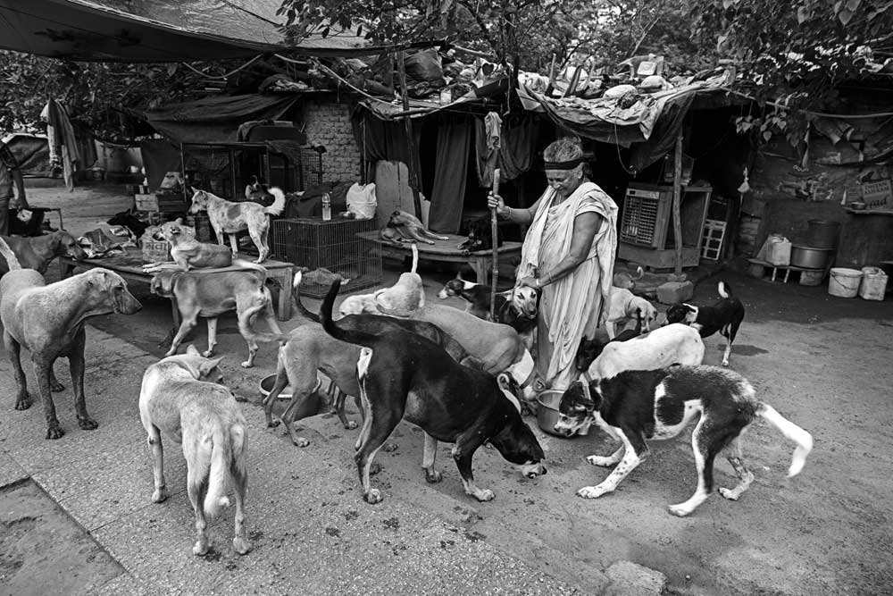 The Secret Lives of Indian Street Dogs - Open The Magazine