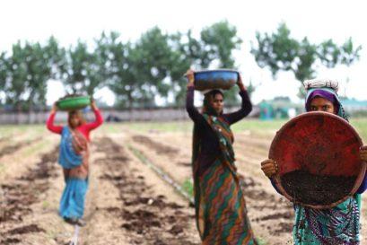 A biodynamic farm in Noida