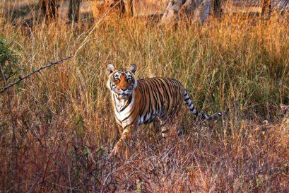 At Ranthambhore National Park
