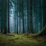 Speaking Trees